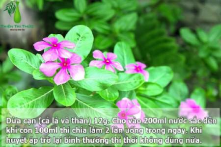 CÂY HOA CÂY THUỐC QUANH NHÀ – (P2)