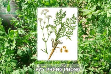 PHÒNG PHONG