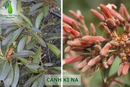 CANH KI NA